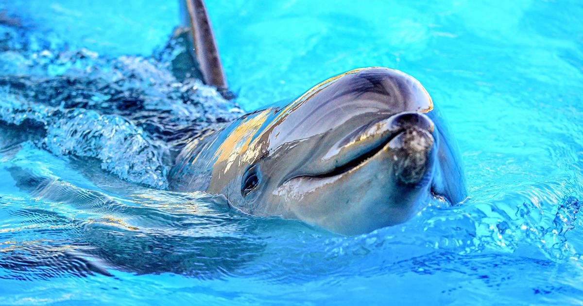 Il delfino vuol conoscere i due cani ospiti sulla barca e salta per vederli