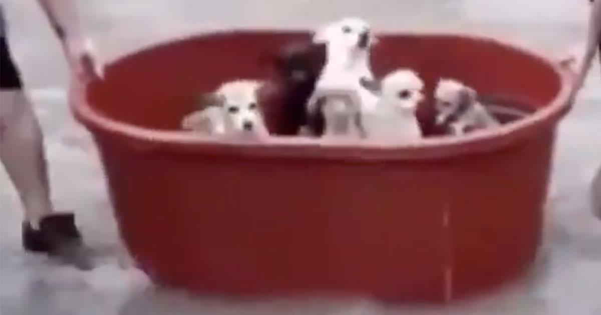 Sette cuccioli salvati dall'uragano: le immagini arrivano dal Messico