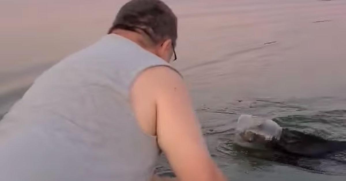 L'incredibile salvataggio di un cucciolo di orso che rischiava di morire annegato: il video