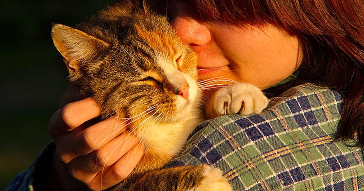 Le fusa dei gatti possono curare alcune malattie, lo dice questo studio
