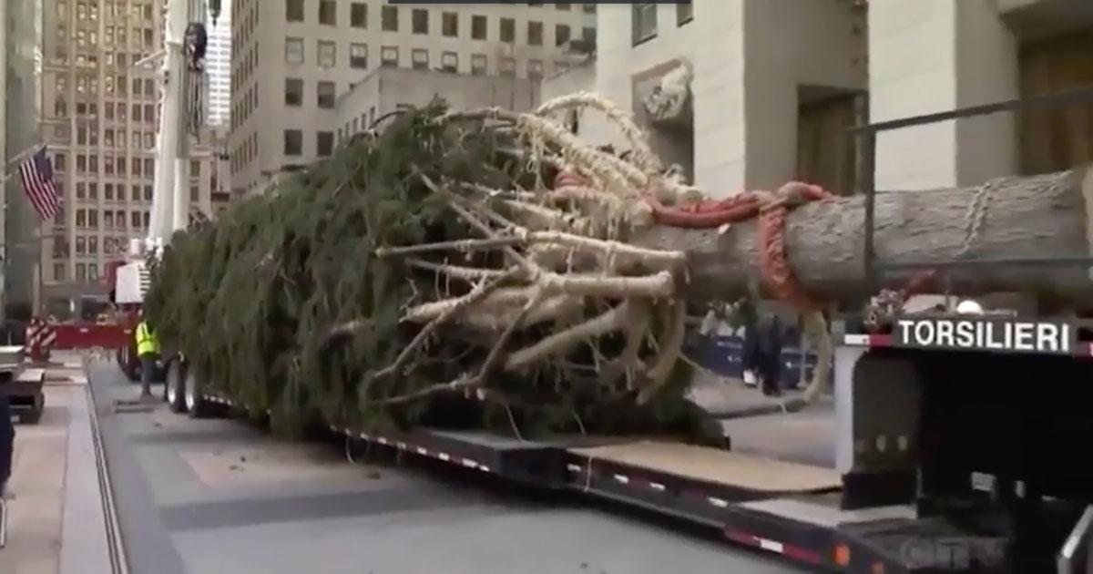 New York ha il suo 'Spelacchio': l'albero del Rockefeller Center viene preso in giro su Twitter
