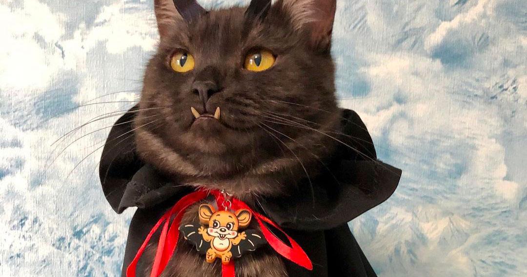 Nessuno lo voleva adottare e ora è famoso in tutto il mondo: ecco Griu, il gatto vampiro