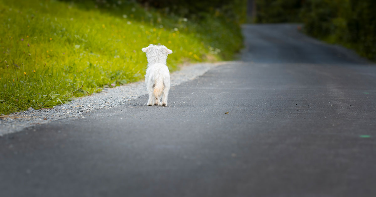 Lo dimenticano alla stazione di servizio, il cane percorre 60 chilometri e torna a casa