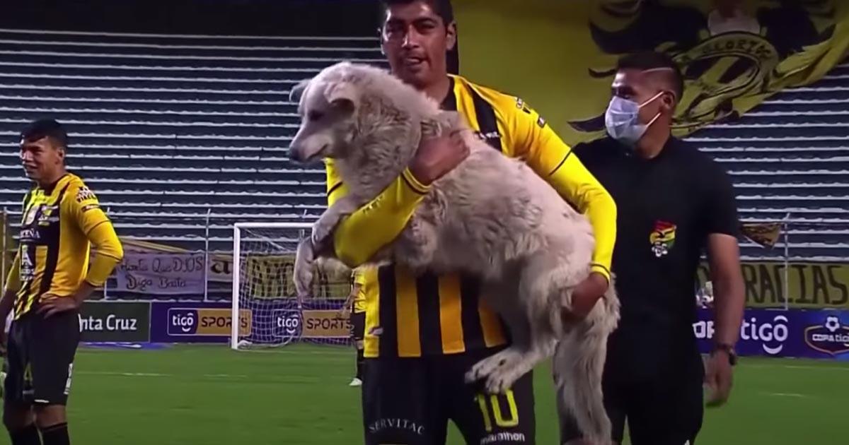 Il cane randagio interrompe la partita, il calciatore lo adotta e lo porta a casa con lui