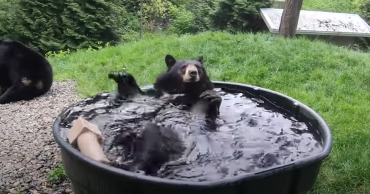 L'orso si fa il bagno: il video da oltre due milioni di visualizzazioni