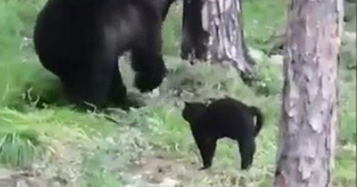 L'orso si avvicina a un gruppo di pescatori ma la loro gatta lo caccia via: il video