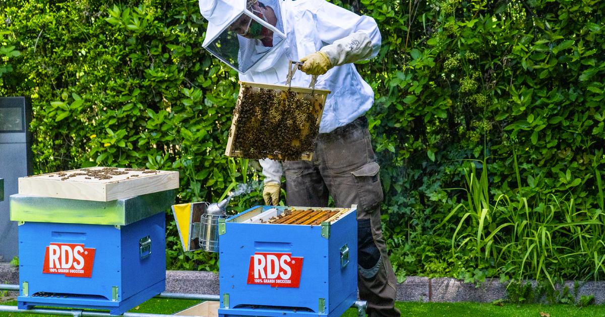 RDS aiuta l'apicoltura con le sue api per contrastare la crisi del miele