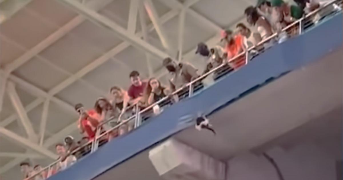 Il gatto cade dagli spalti dello stadio: il video del salvataggio diventa virale